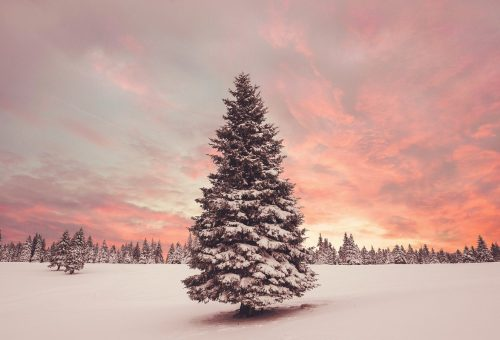 Karácsony egyedül, de nem magányosan