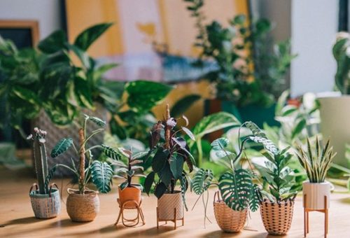 Miniatűr növények, amelyek garantáltan nem száradnak ki