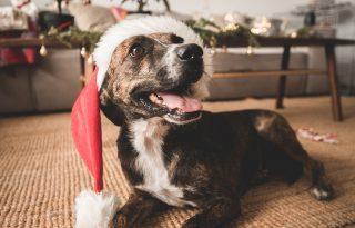 A kutya egy életre szól, nem csak karácsony idejére