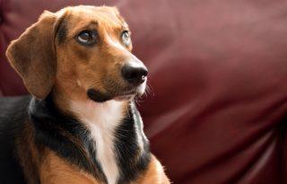 Petflix és nyugalom: érdekli a kutyát a tévé?