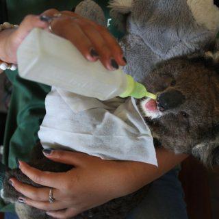 Távolból is segíthetünk az ausztrál erdőtűz megfékezésében