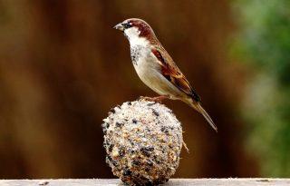 Városban, zöldben: téli madáretetés a városban