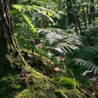 Zene és természet – a növények hangja