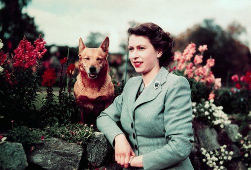 Bárcsak nekünk is olyan életünk lehetne, mint Erzsébet királynő kutyáinak
