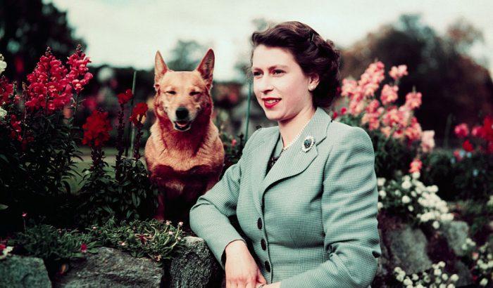 Erzsébet királynőt ismét corgik veszik körül