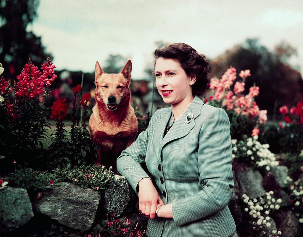 erzsébet-királynő-corgi-kutya
