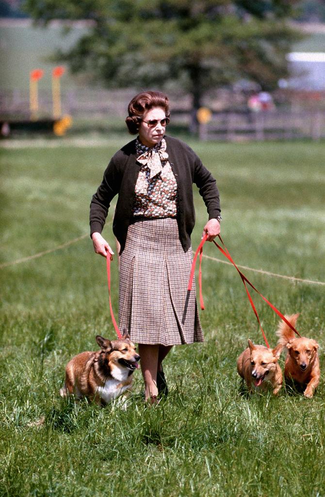 erszébet-királynő-corgi-kutya