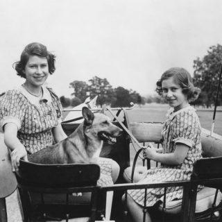 A legcukibb képek Erzsébetről és imádnivaló kutyusairól