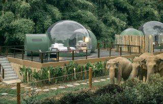 Luxusbuborékokból figyelhetjük az elefántokat Thaiföldön