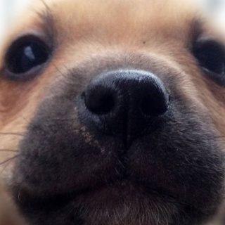 Városban, zöldben: felelős kutyatartás a város közepén