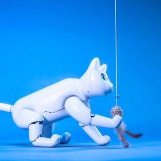A csúcsmodern robotmacska jobb, mint az igazi