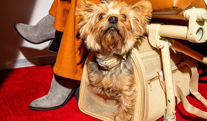 Stílusos hordozóban utazhatnak a kutyák