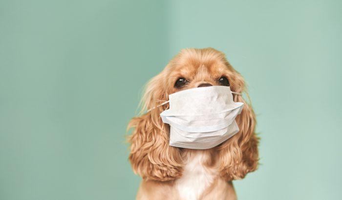 A koronavírus és a háziállatok: tudnivalók gazdiknak