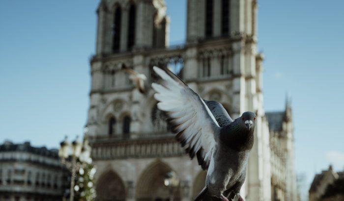 Megnyithatják tavasszal a Notre-Dame egy részét