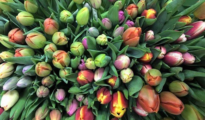 Városban, zöldben: így maradhatnak a legtovább életben a vágott virágok a lakásban