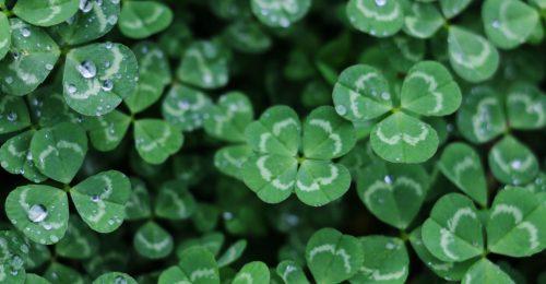 Mitől olyan zöld Írország?