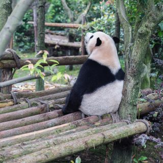 Fedezzük fel az állatkerteket a kanapénkról!