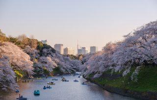 A világ legszebb kertjeivel ünnepeljük a tavaszt – virtuálisan