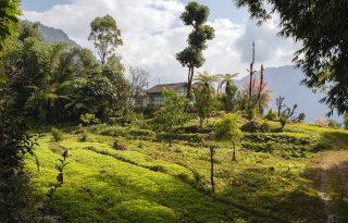 Ananász, kardamom, mangó – a világ első bioállamának kincsei