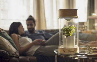 Párkapcsolati kommunikáció koronavírus idején: így segíthet a LovePlant kihívás
