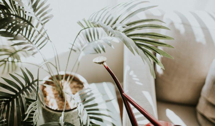 5 szobanövény, ami trópusi hangulatot varázsol az otthonodba