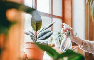 Hogyan válassz szobanövényeket?