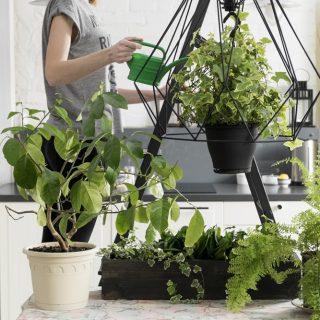 Most foglalkozz a szobanövényeiddel, hogy egész évben szépek legyenek