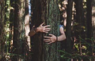 Öleljünk meg egy fát, ha hiányoznak az emberek