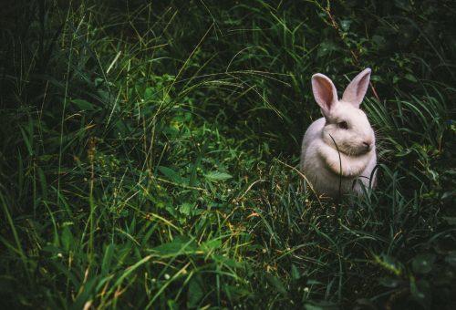 Hogyan ünneplik a húsvétot az egyes csillagjegyek?