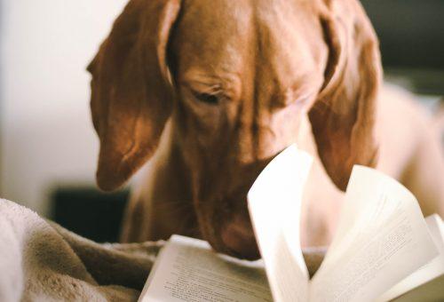 Hogyan lett az olvasás a járvány nagy nyertese?