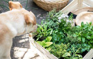 Készíts egyszerű fűszernövényekkel különleges italokat!