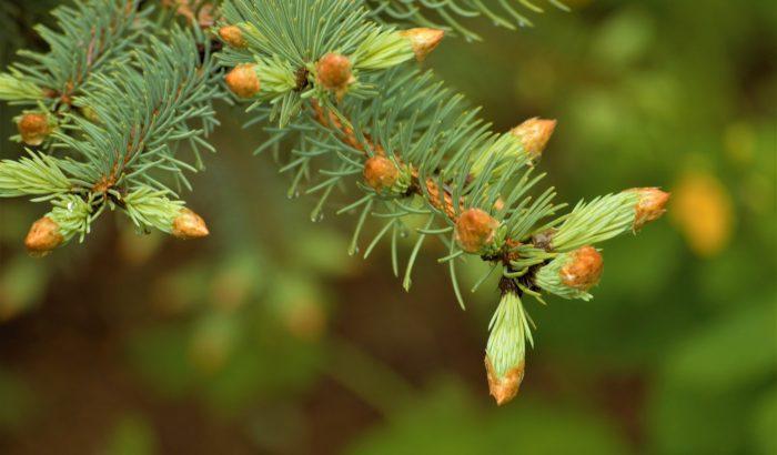 A fagyott erdő aromája, avagy merész kísérletezés a konyhában