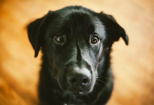 Segíts te is – az állatoknak