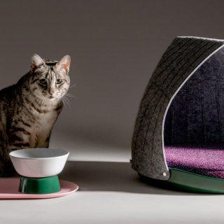 A moduláris macskabútor együtt nő a cicáddal