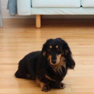Kutyabarát padlót keresel? Válaszd ezt a 3 fajtát!