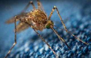 6 otthoni megoldás a szúnyogcsípés enyhítésére
