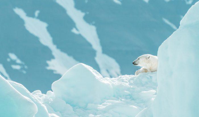 Ütött a jegesmedvék utolsó órája