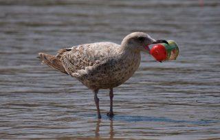 Hogyan jut el a te elhajított műanyag palackod az óceánokba?