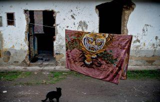 9 kortárs magyar alkotó legjobb cicás fotói