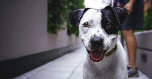 A kutyák kiszagolják a terhességet?!