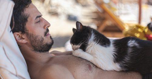 Nem szeretik a nők a macskás férfiakat