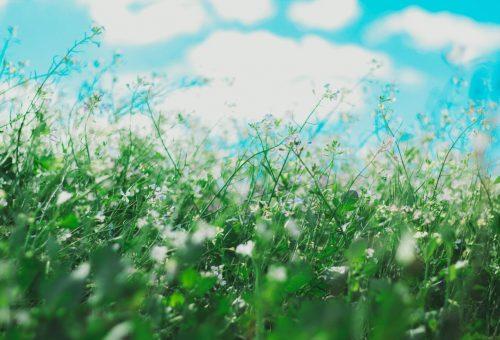 Így élheted túl az orvosok szerint az augusztusi allergiaszezont