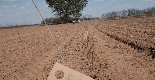 Együtt ezer fáért! – A Nosalty.hu és a Plant A Tree Cocktail közös kampánya