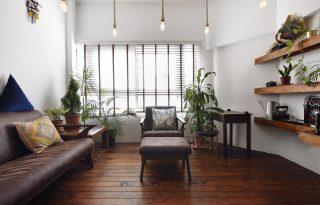 Ezekkel a növényekkel környezettudatos módon tisztíthatjuk a szoba levegőjét