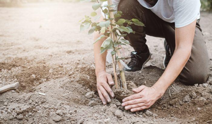 Szabad-e, kell-e ma Magyarországon fát ültetni, erdőt telepíteni?