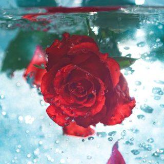 3 rózsavizes szépségújdonság