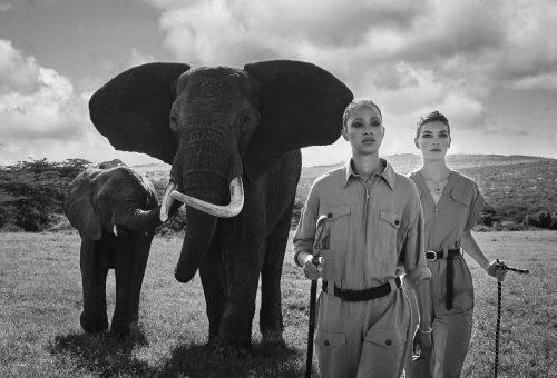 Afrika állatainak védelmére gyűjt az etikus világmárka