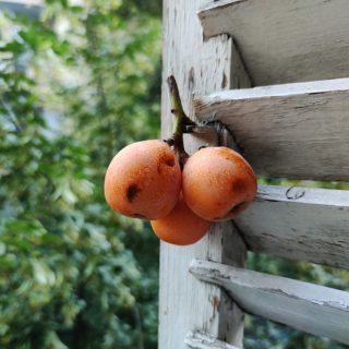 Ez a 3 magyar szuperétel ősszel terem, mégsem eszünk eleget belőle