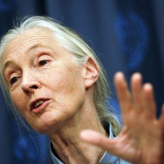 Jane Goodall szerint még van remény a túlélésre