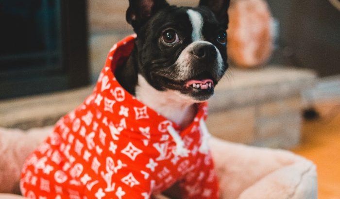 Jólöltözött jószágok: kitört a kutyavilág a kisállatdivatban